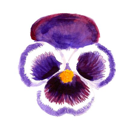 stamens: Watercolor image of violet flower of pansy on white background Stock Photo