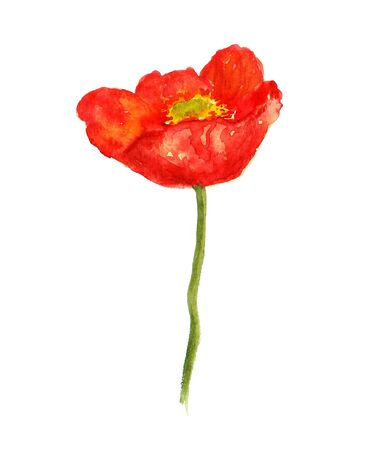 isolated on red: Watercolor image of red poppy flower on white background Stock Photo