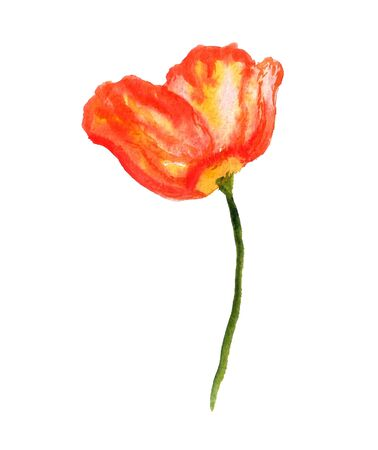 Watercolor image of red poppy flower on white background Stock Photo