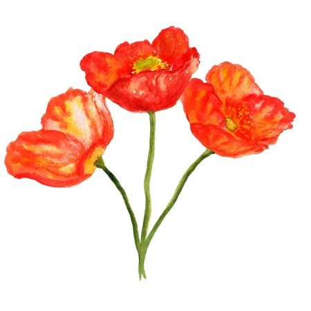 opium: Watercolor image of bouquet of poppy flowers Stock Photo
