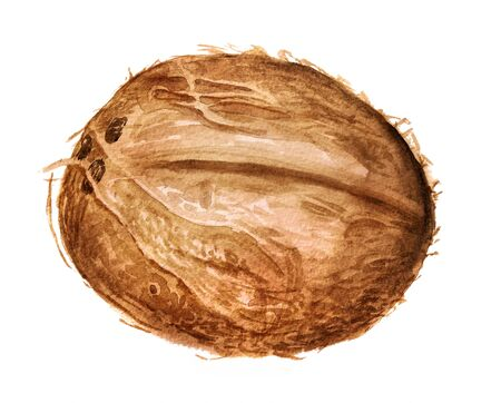 Watercolor image of coconut on white background