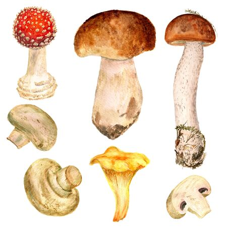 fly agaric: watercolor set of different mushrooms on white background