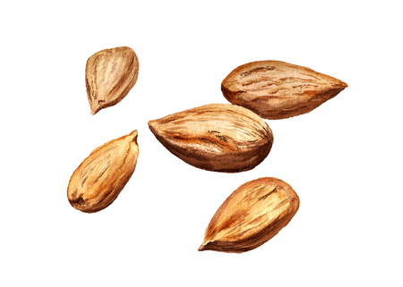 Watercolor image of group of almonds isolated on white background Imagens