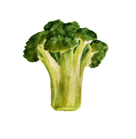 tiresome: Watercolor image of broccoli on white background Stock Photo