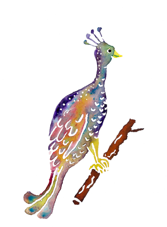 Decorative watercolor image of peacock on white background Stock Photo