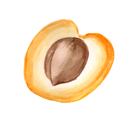 Watercolor image of half of apricot on white background