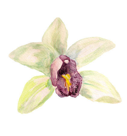 Watercolor image of white orchid on white background