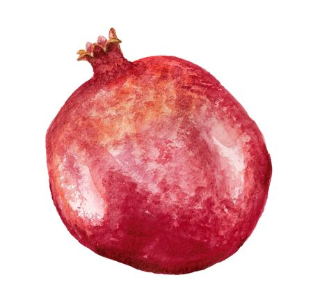 Watercolor image of ponegranate on white background