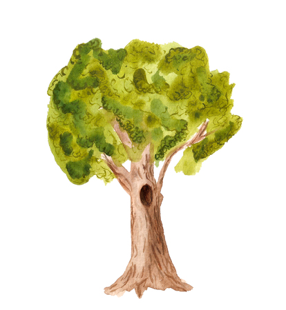 Watercolor image of oak tree on white background Stock Photo