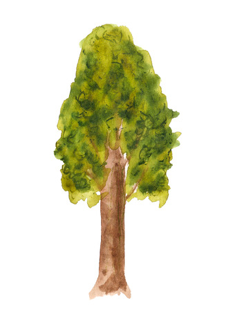 Watercolor image of tree on white background