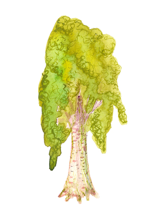 Watercolor image of birch tree on white background Stock Photo
