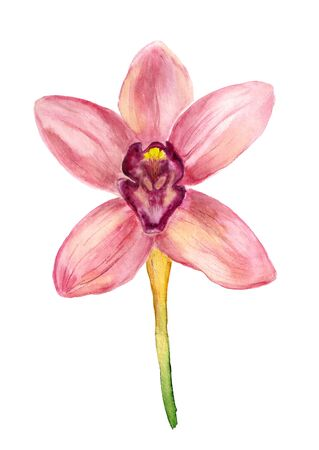 Watercolor image of pink orchid on white background Stock Photo