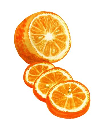 Watercolor image of sliced orange on white background