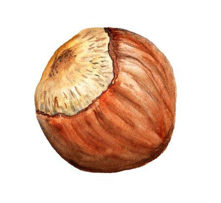 Watercolor image of hazelnut on white background Stock Photo