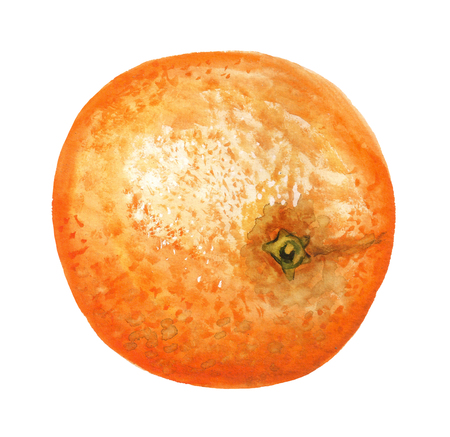 Watercolor image of orange on white background Stock Photo