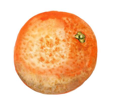 zest: Watercolor image of whole orange on white background