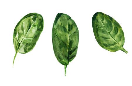Imagen de acuarela de tres hojas de espinacas sobre fondo blanco