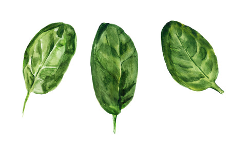 Watercolor image of three leaves of spinach on white background