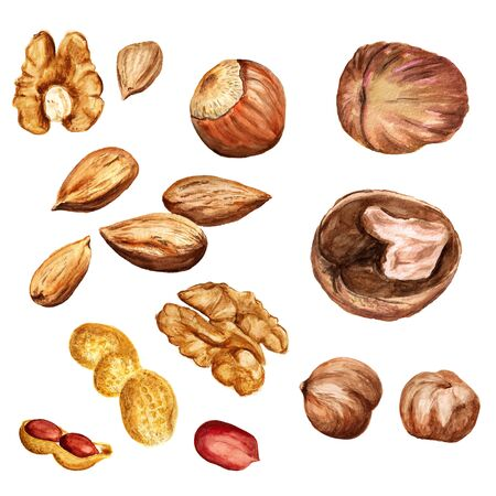 Set of watercolor images of different nuts on white background