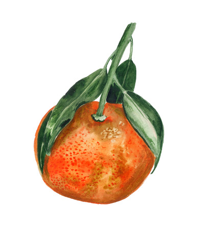 Watercolor image of tangerine with leaves on white baclground