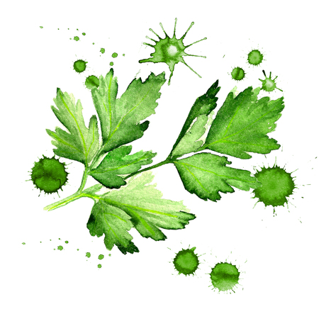 Watercolor image of leaves of parsley with paint blots on white background
