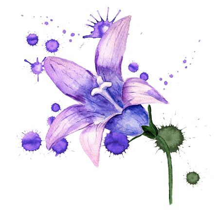 Watercolor image of violet flower of bluebell with paint blots on white background Stock Photo
