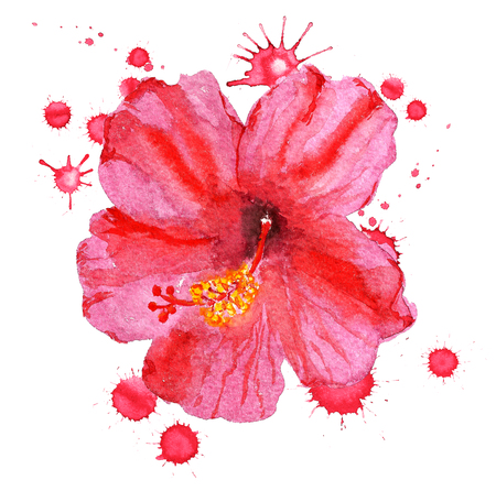 Watercolor image of flower of red hibiscus with paint blots on white background