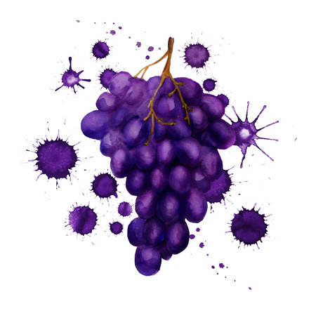 Watercolor image of dark grape with paint blots on white background Stock Photo