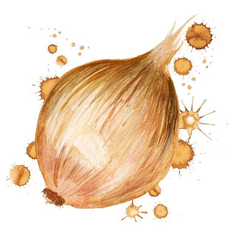 Watercolor image of onion with paint blots on white background