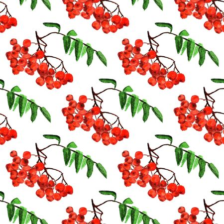 Seamless pattern with watercolor image of rowan. Good for textile fabric design, wrapping paper and website wallpapers. Stock Photo