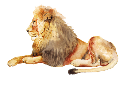 Watercolor image of lion on white background