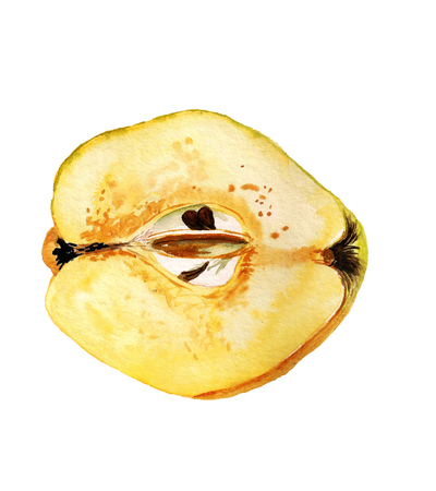 Watercolor image of half of apple quince on white background