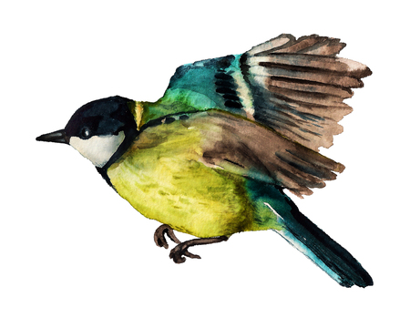 Watercolor image of flying Great tit on white background
