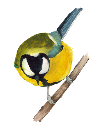 Watercolor image of great tit sitting on the branch on white backgroung Stock Photo