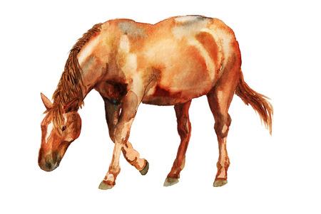 Waterverfbeeld van rood paard op witte baclground