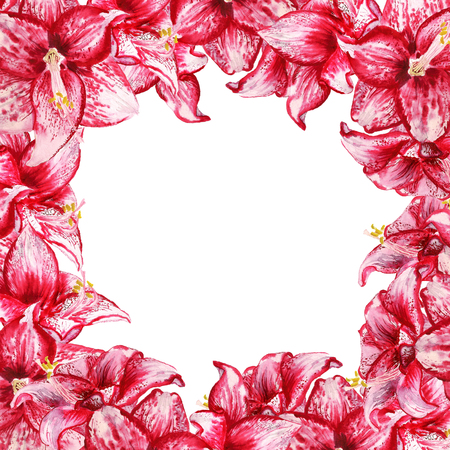 Frame with watercolor image of red flowers of amaryllis on white background Stock Photo