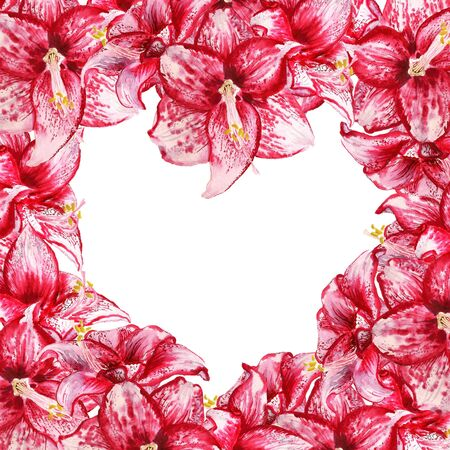 Frame like as heart shape with watercolor image of red flowers of amaryllis on white background