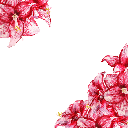 Greeting card with two corners with watercolor image of red flowers of amaryllis on white background Stock Photo