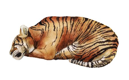 Watercolor image of sleeping tiger on white background Stock Photo