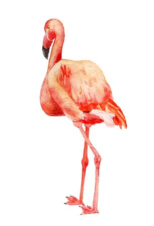 Watercolor image of flamingo on white background Stock fotó