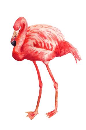 Watercolor image of flamingo on white background Stock Photo