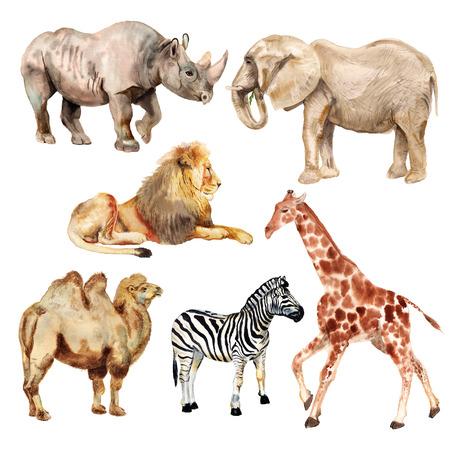 Set of watercolor images of african animals. Rhino, lion, elephant, camel, zebra, giraffe.