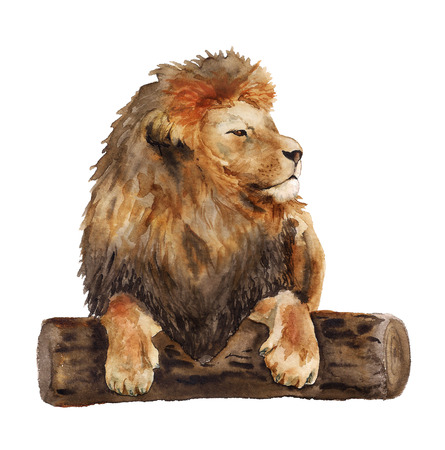 Watercolor image of lying lion on white background