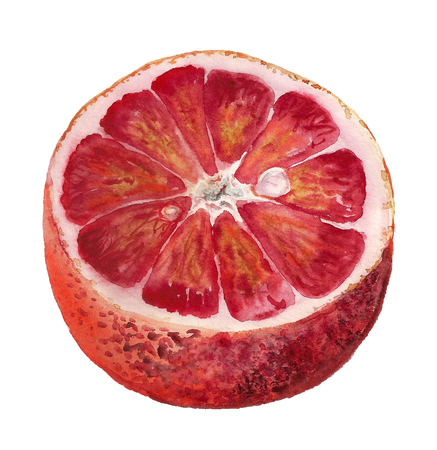 Watercolor image of half of blood orange on white background