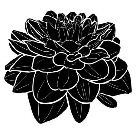 Black dahlia silhouette