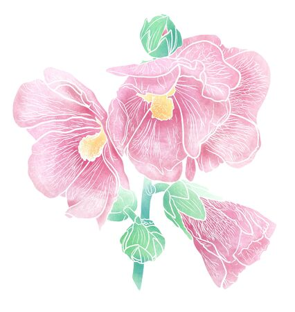 Hollyhock flowers isolated on white background. Mallow blossom. Romantic summer image. Hand drawn illustration. Mix-media design. Digital painting and watercolor textures.