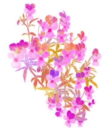 Viola tricolor watercolor illustration on white background. Romantic decorative bouquet. Meadow wildflower isolated.