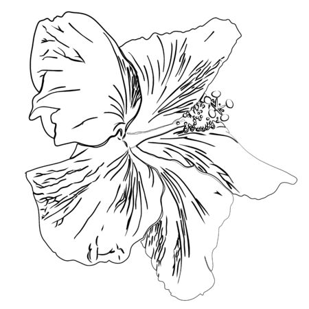 Flower of hibiscus