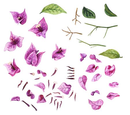 Details of bougaivillea isolated on white background. Constructor for creating your own flowers and branches for any design. Watercolor set flowers, leaves, branches, petals and pistils.