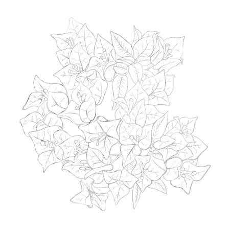 Silver outline image of flowers of bougainvillea. Good element for design greeting card, wedding invitation and for other romantic events
